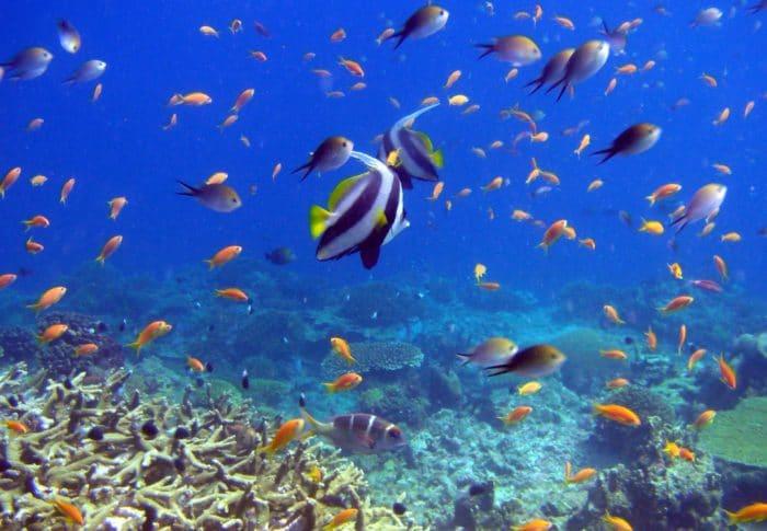 Documentaire Seaspiracy: Comment sauver les océans