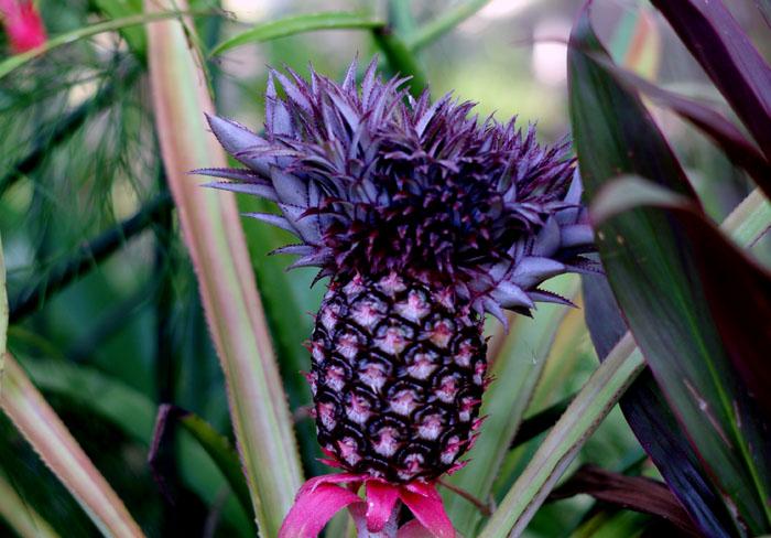 Frutta in Nuova Claeddonia